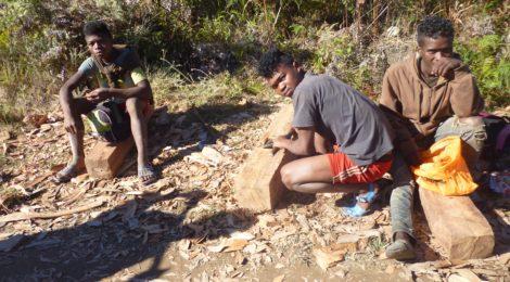 Il commercio illegale di palissandro
