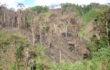 Vi chiediamo di non tagliare e bruciare più la foresta!!