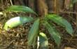 Progetto Treedom: Iniziata le attività di collaborazione con Treedom
