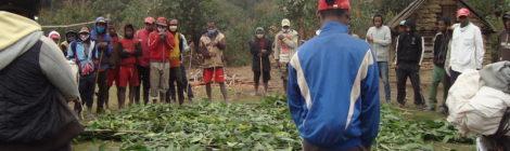 """Distribuite altre 1.200 talee di vaniglia ai contadini del progetto """"adotta un contadino"""""""
