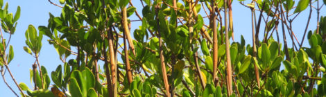 Nuovo progetto e nuovo video sulle mangrovie del villaggio di Kimony, Ovest Madagascar