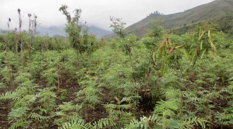 Obiettivo: rimboscare il Madagascar con Treedom